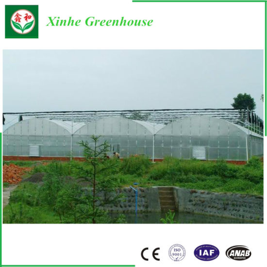 Economic Film Vegetable Greenhouse for Tomato