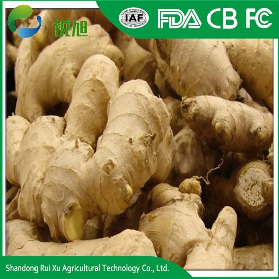 China High Quality Fresh Ginger Suppliers pictures & photos