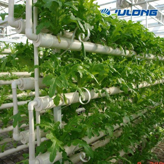 Aquaponic Lettuce Hydroponics Growing System Venlo Spire Glass Greenhouse Farm for Sale