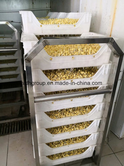 Wheat Sprouting Machine/Soya Bean Sprout Machine pictures & photos
