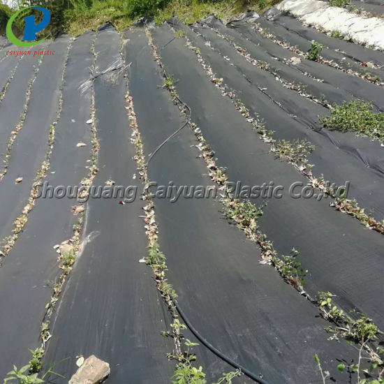 China Commercial Grade Weed Barrier Landscape Fabric China Weed Control Mat And Pp Weed Mat Price