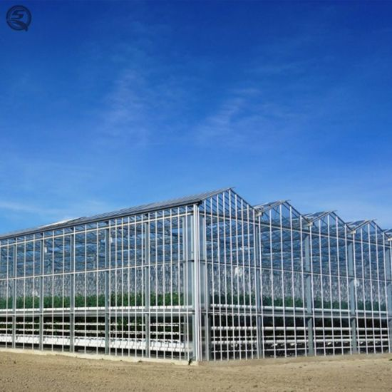 Agriculture Multi Span Glass Green House for Planting/Flower
