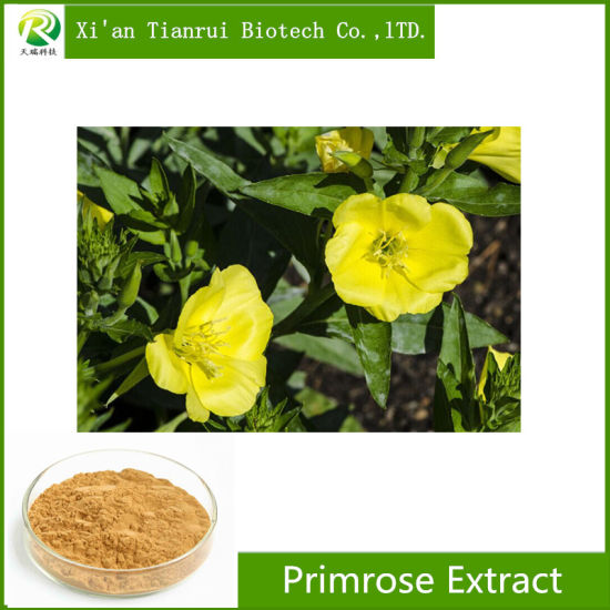 100% Natural Evening Primrose Extract Powder pictures & photos