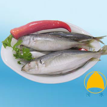 Fish Products / Blue Mackerel Scad