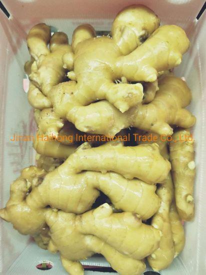 2018 New Crop Fresh Air-Dried Jumbo Ginger