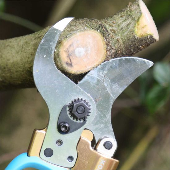 Electric Pruner and Electric Pruning Shear for Garden and Vineyard with Ce pictures & photos