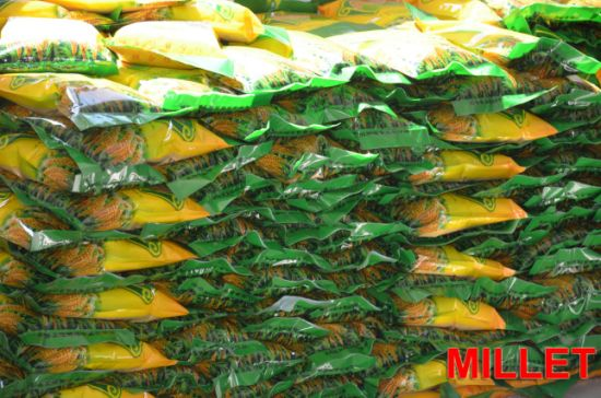 High-Quality Yellow Hulled Millet Healthy Food Organic Selenium Millet