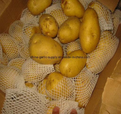 New Crop Fresh Holland Sweet Frozen Potato From China pictures & photos