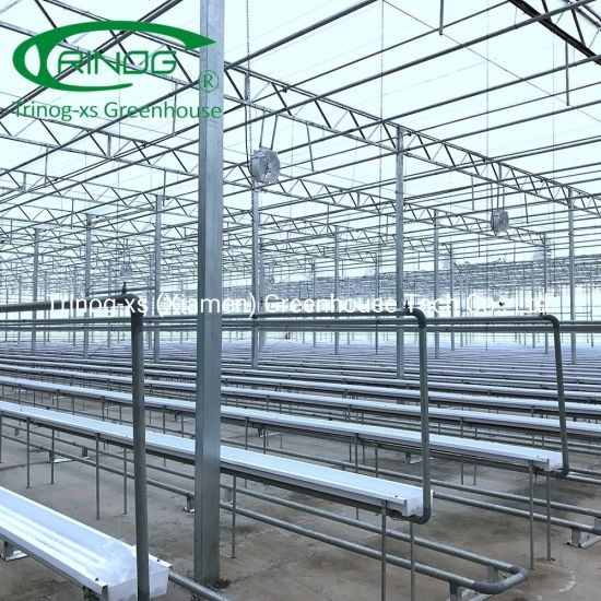 European style venlo glass cover commercial greenhouse for lettuce