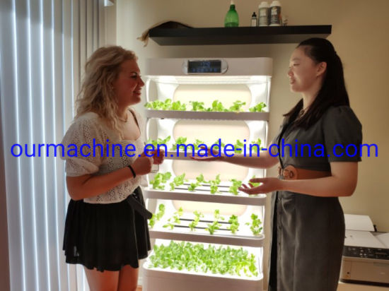 Urban Home Garden Hydroponic Planter Price with LED Grow Lights