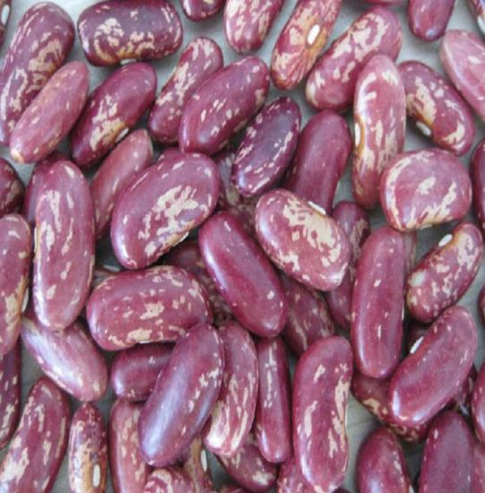 China Natural Growth Dried Organic Best Selling Purple Speckled Kidney Bean Free Samples China Organic Light Speckled Kidney Beans Light Speckled Kidney Bean Factory
