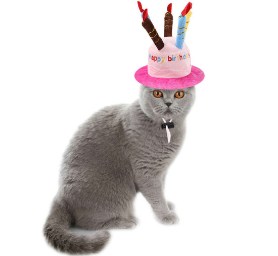 China Cute Adorable Cat Dog Pet Happy Birthday Party Hat with Cake and 5  Colorful Candles Design Cosplay Costume Accessory Headwear for Dogs Cats  Esg12529 - China Pet Hat and Pet Cute