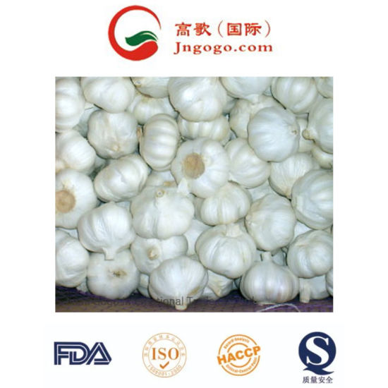 Fresh Normal White Garlic Supplier (5.5cm and up)