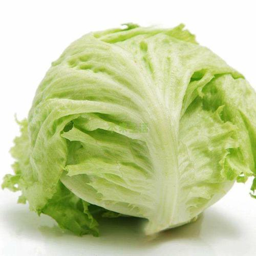 Cheapest Price Fresh Iceberg Lettuce pictures & photos