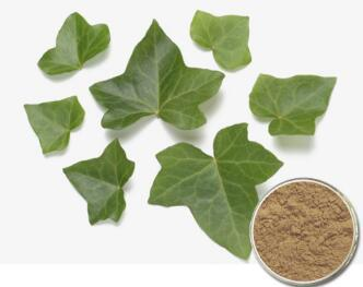 Extract IVY Dry Hederacoside C > 10% Hedera Helix (IVY leaf) Dry Extract