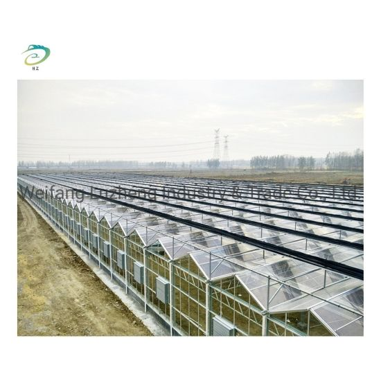 China Film Greenhouse for Garden Greenhouse, Large Multi-Span Commercial Venlo Glass Greenhouse