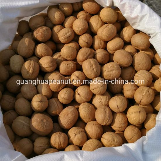 Extra Quality Papery Walnut in Shell Easy Cracked 32mm up pictures & photos