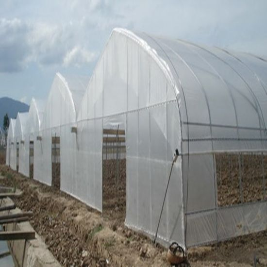 Agriculture Multi Span Film Greenhouse for Vegetables