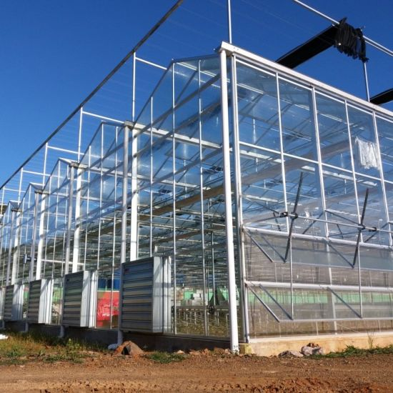 Multi-Span Commercial Glass Greenhouse with Hydroponic Systems for Cucumbers