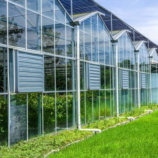 Glass Greenhouse with Cooling System for Vegetables Planting