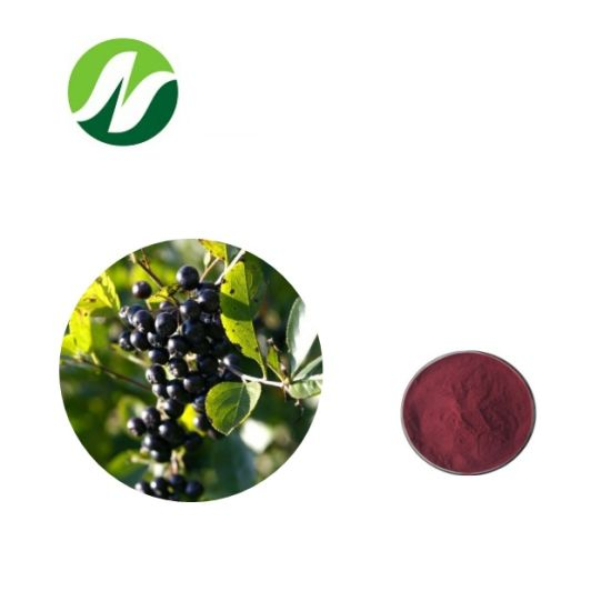 China Factory 1-25% Anthocyanidins Chokeberry Aronia Melanocarpa Extract