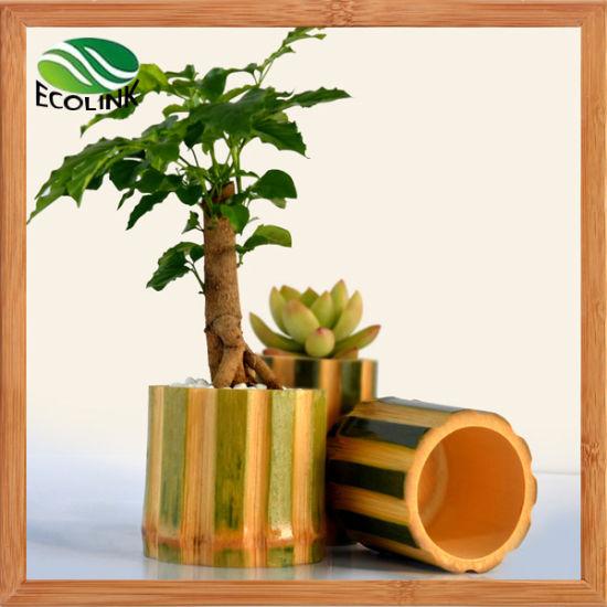 China Natural Bamboo Pot Bamboo Succulent Plant Pot China