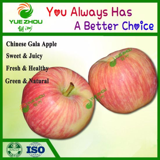 Exporting Gala Apple Fresh Red Apple From China
