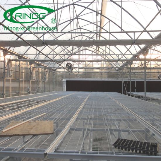 EU type gothic roof Commercial Agricultural Film Greenhouse for flower farm
