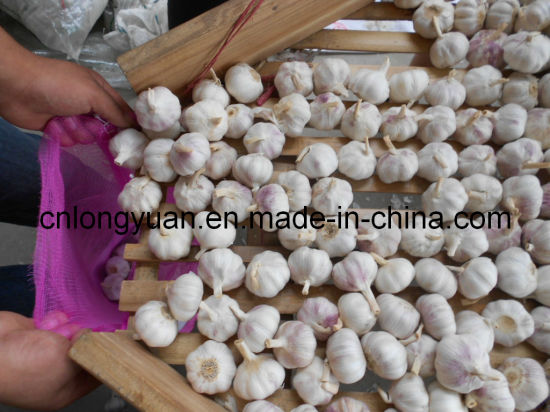 3-6.0cm Good Quality White Garlic pictures & photos