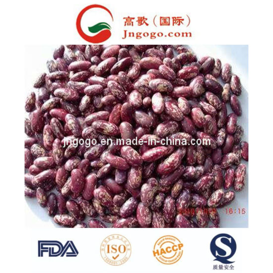 Top Quality Purple Speckle Kidney Beans pictures & photos