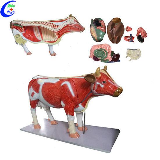 China Cow Simulation Anatomical Model China Animal Model Animal