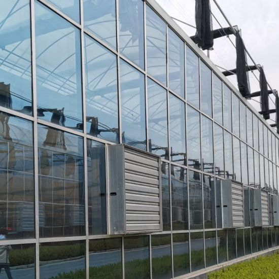 Multi- Span Agriculture Glass Greenhouse for Growing Vegetable