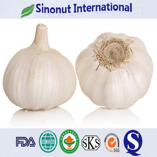 Jinxiang Garlic