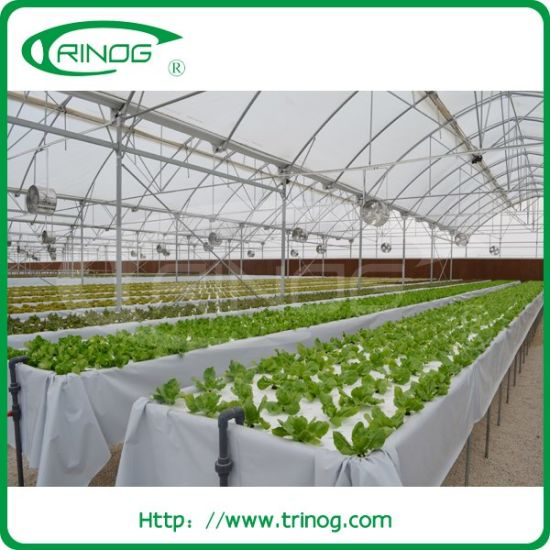 Commercial Hydroponics System in greenhouse for lettuce