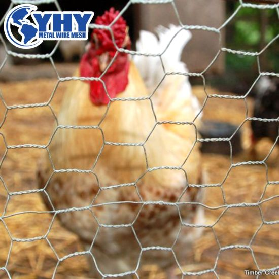 Factory Price Galvanized Hexagonal Chicken Wire Mesh for Fence and Plastering