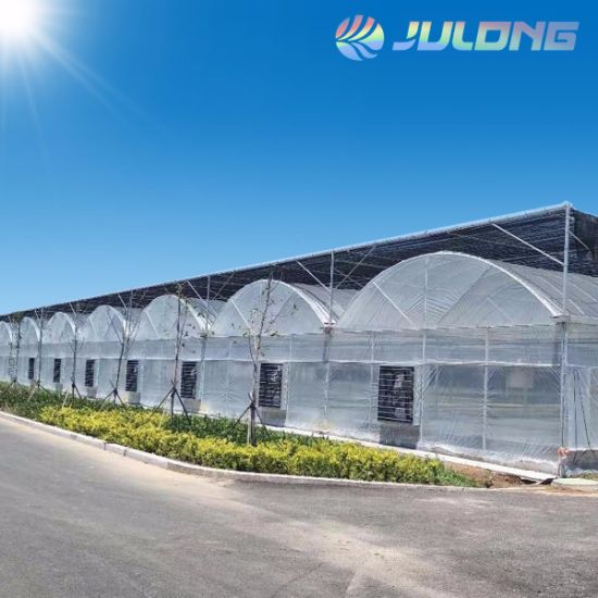 Professional Agricultural Equipment Multi Span Plastic Film Greenhouse for Vegetables Flowers Fruits
