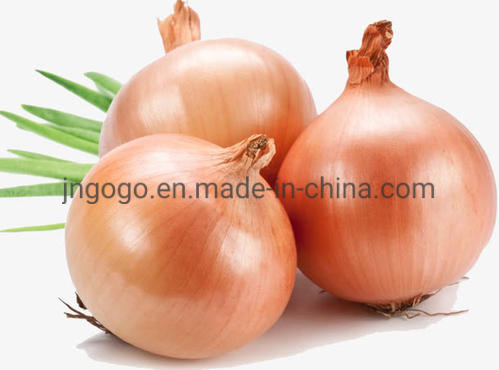 Professional Fresh Yellow Onion for Exporting/SGS pictures & photos