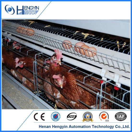 China Low-Cost Layer Egg Chicken Cage for Poultry Farm - China