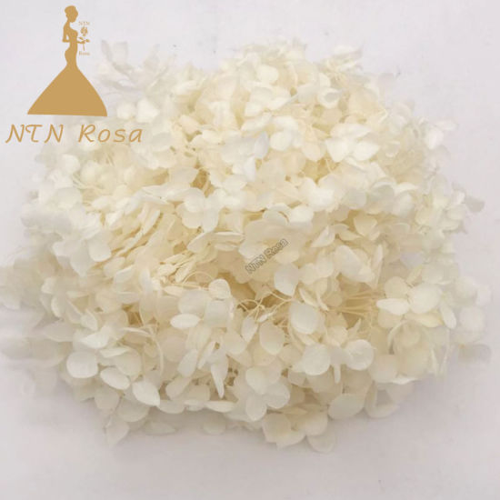 White Preserved Annabelle Hydrangea for Rustic or Vintage Wedding Bouquet pictures & photos