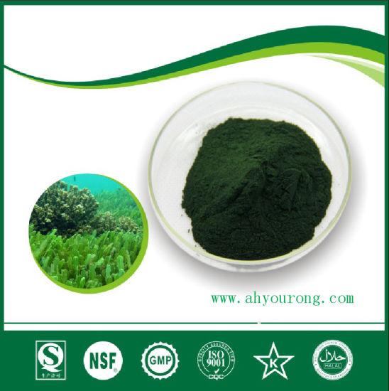 Sea Weed Extract, Seaweed Polysaccharide 30 % -80 %, Plant Extract