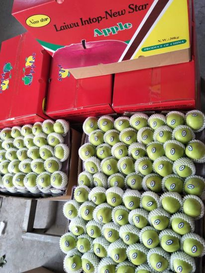 Fresh New Crop Red/Green Qinguan Apples From China
