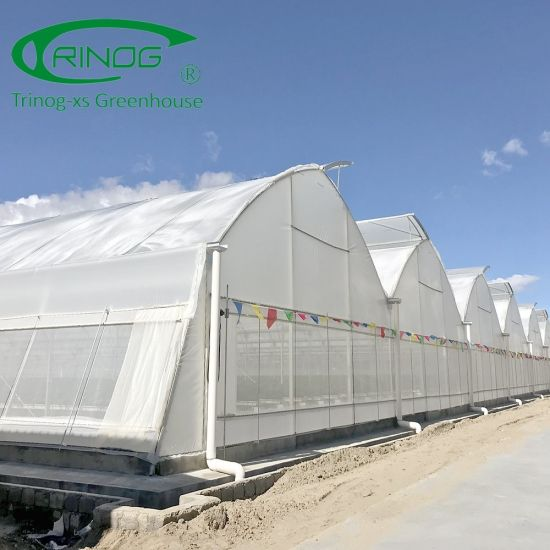 High advanced hydroponics film Commercial Greenhouse for farm
