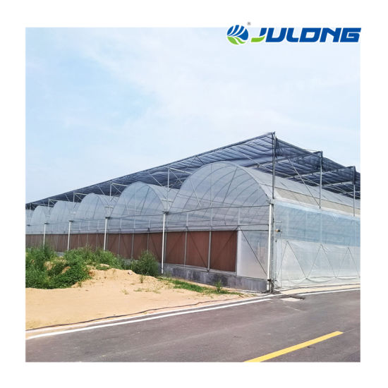 Low Cost Hydroponic Growing Tunnel Multi Span Plastic Film Greenhouses for Sale