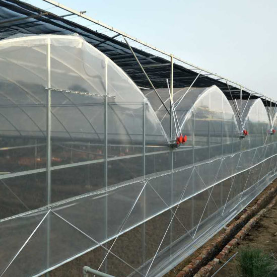 Single/Multi Span Plastic Film Tomato House for Sale in China