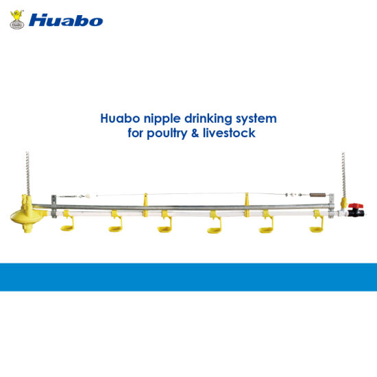Poultry Farm Equipment Automatic Nipple Drinking System