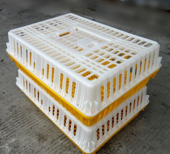 China Farming Plastic Broiler Chick Duck Live Chicken