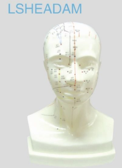 Head Acupuncture Model pictures & photos
