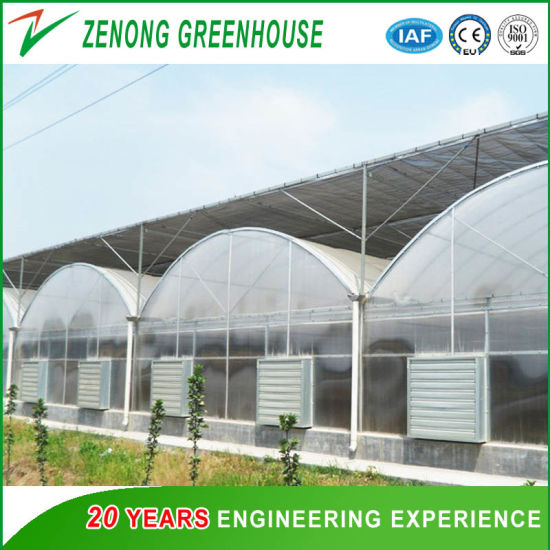Arch Multispan Po/PE Film Greenhouse for Horticulture and Vegetables Flowers Planting pictures & photos