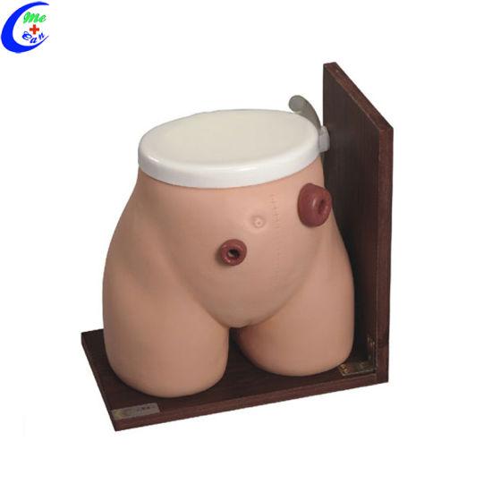 China Human Anatomy Ostomy Nursing Model for Students - China ...