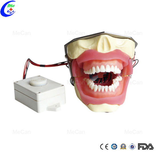 Dental Anesthesia Extraction Model for Anesthesia and Tooth Extraction
